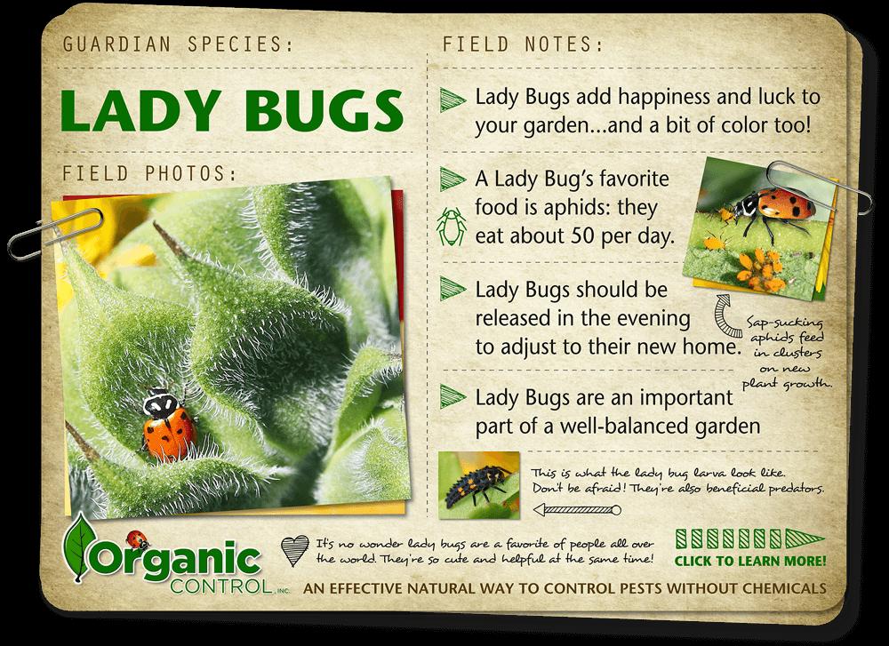 https://organiccontrol.com/lady-bugs/