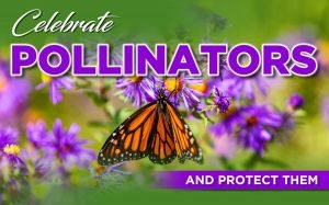 CELEBRATE POLLINATORS – AND PROTECT THEM